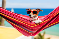 Hund på hängmattan Royaltyfri Fotografi