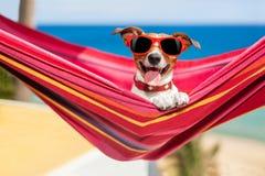 Hund på hängmattan Arkivfoto
