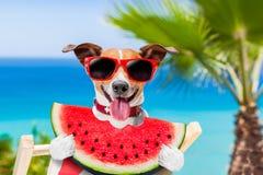 Hund på hängmattan och vattenmelon Arkivbild