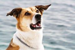Hund på havet, stående, 104 Arkivfoto