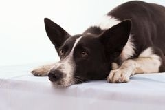 Hund på isolerad vit bakgrund Arkivfoto