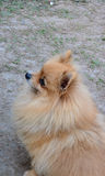 Hund på jordning Arkivbild