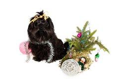 Hund på julgranen Royaltyfria Foton
