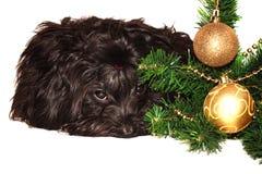Hund på julgranen Royaltyfri Fotografi