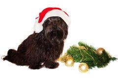 Hund på julgranen Arkivbilder