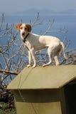 Hund på kedja på taket av hundkojan royaltyfria foton