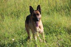 Hund på kullen Arkivfoton