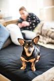 Hund på mänsklig säng för ` s Arkivfoto