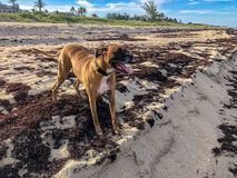 Hund på sanden på stranden royaltyfri foto