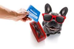 Hund på semesterferier och bagagepåse royaltyfria foton