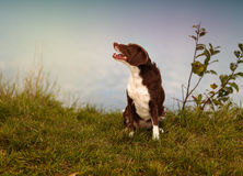 Hund på sjön Royaltyfri Foto