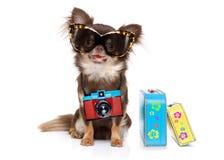 Hund på sommarsemester arkivfoto