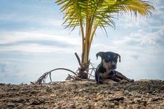 hund på sommarsemester på stranden under en palmträd Arkivbilder