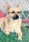 Hund på staketet guard arkivbild
