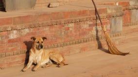Hund på stengatan i solljus Stor hund som ligger på trottoar nära rött stenfundament av byggnad i solljus Dagligt liv stock video