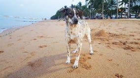 Hund på stranden, djur, hav royaltyfri foto