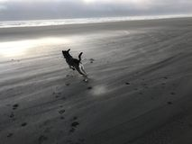 Hund på stranden på solnedgången Arkivbilder