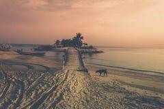 Hund på stranden under solnedgång royaltyfri fotografi