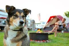 Hund på tältplatsen framme av mannen som spelar gitarren Royaltyfri Fotografi