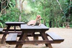 Hund på tabellen Royaltyfri Fotografi