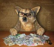 Hund på tabellen med dollar royaltyfria bilder