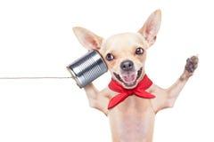 Hund på telefonen Arkivbild