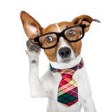 Hund på telefonen royaltyfri foto