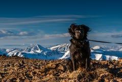 Hund på toppmötet Royaltyfria Bilder