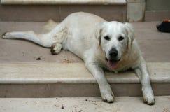 Hund på trappan royaltyfri fotografi