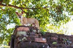 Hund på väggen Royaltyfri Bild