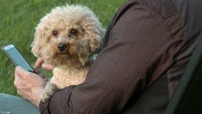 Hund på värdssjälaringningen arkivfilmer