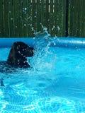 Hund på vattnet Fotografering för Bildbyråer