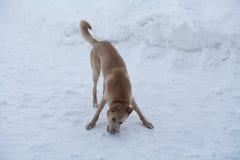 Hund på vinterdag Arkivbild