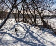 Hund på vintern Forest Trail fotografering för bildbyråer