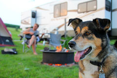Hund på tältplatsen framme av mannen som spelar gitarren Royaltyfria Bilder