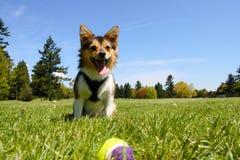 Hund am Park Stockfotografie