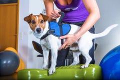 Hund physiatric Stockbild
