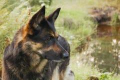 Hund- profil p? en skogbakgrund royaltyfri fotografi