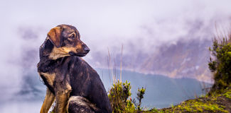 Hund am Quilotoa-Kratersee Ecuador lizenzfreies stockbild