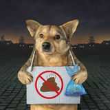 Hund räumte sein Heck in der Straße auf stockbilder