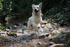Hund-retiever stockbild
