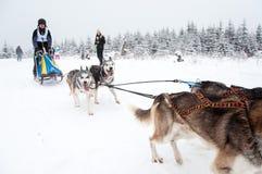 Hund-rodelndes Rennen Lizenzfreie Stockfotos