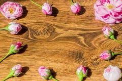 Hund Rose In das Sonnenlicht-auf dem Tisch Rosa Rosa Canina Flowers Valentine Theme Lizenzfreie Stockfotografie