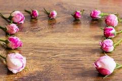 Hund Rose Pink Rosa Canina Flowers Fotografering för Bildbyråer