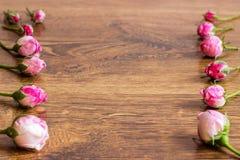 Hund Rose Pink Rosa Canina Flowers Royaltyfri Foto