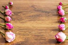 Hund Rose Pink Rosa Canina Flowers Royaltyfria Bilder