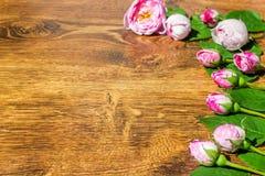Hund Rose Pink Rosa Canina Flowers Valentine Theme Royaltyfria Bilder