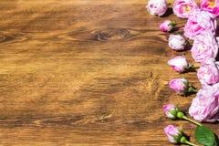 Hund Rose Pink Rosa Canina Flowers Valentine Theme Royaltyfri Foto