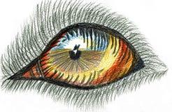 Hund-` s Auge - farbige Bleistift-Zeichnung Stockfoto