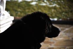 Hund-` s Leben Stockfoto
